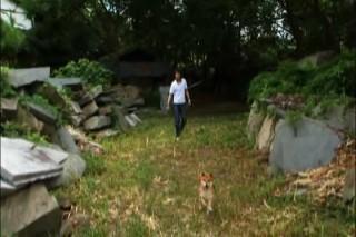犬と散歩中